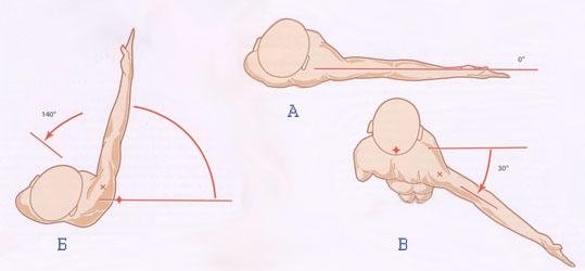 анатомия движения плеча