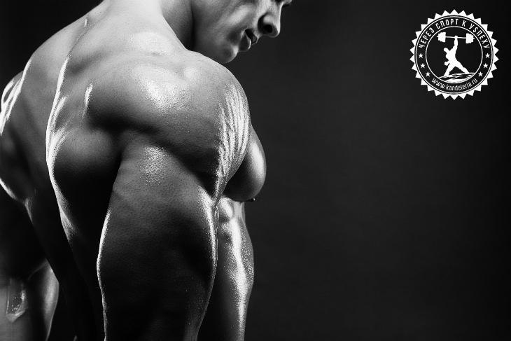 Как накачать огромные плечи в тренажёрном зале – отличие от домашних тренировок