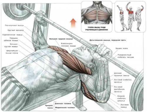 упражнения для грудины