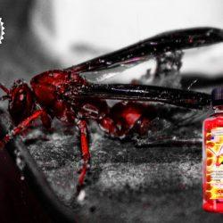 Cloma Pharma Red Wasp