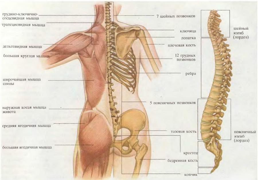 Дискомфорт в области спины