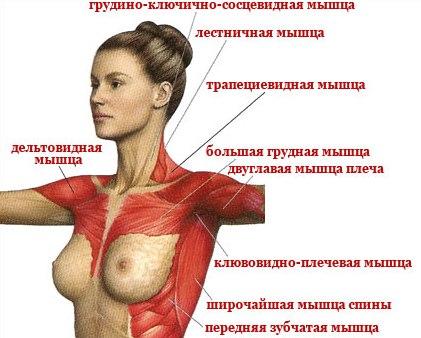 Мышечный корсет